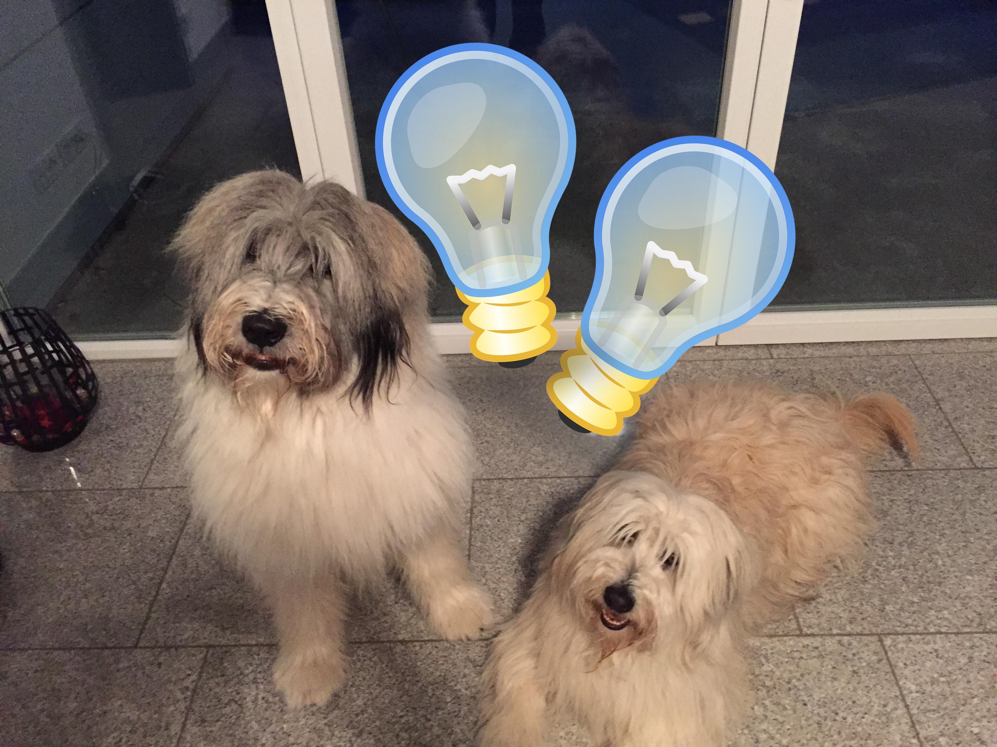 Regel: Bei Abwesenheit Licht für Haustier anschalten